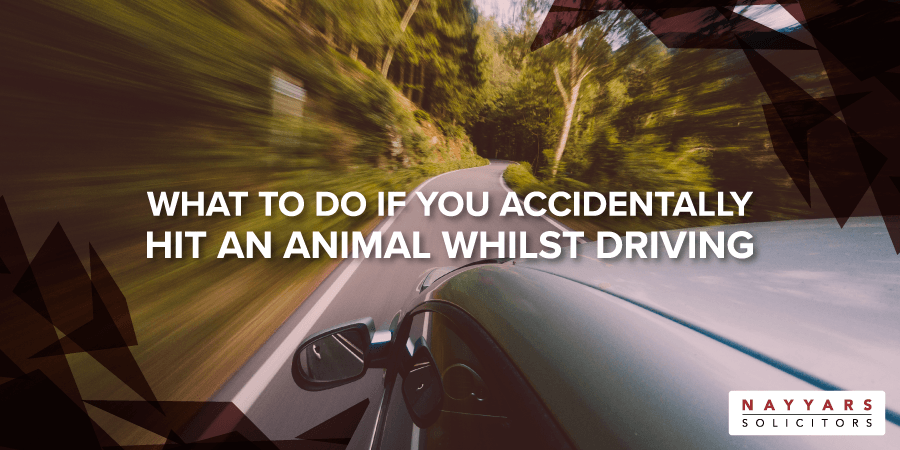 What to do if you accidentally hit an animal whilst driving